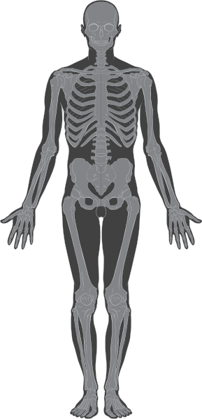 Skeletal Structure Picture
