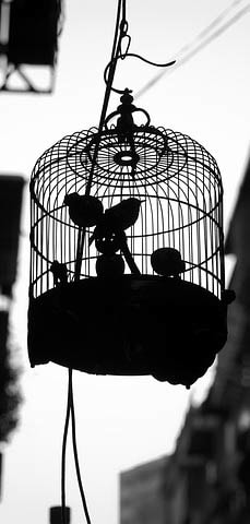 Bird Cage Picture