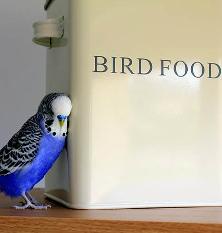 Bird Food Picture