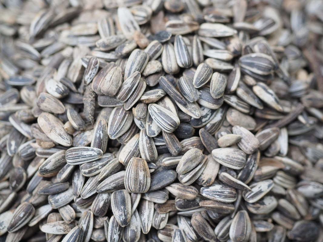 Antioxidant Vitamin E Sunflower Seeds Image