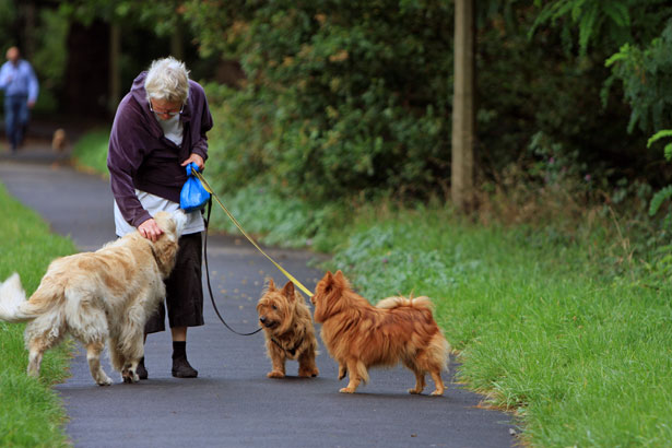 Benefits of Pets for the Elderly Picture