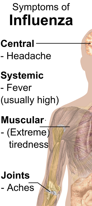 Symptoms of the Flu Picture